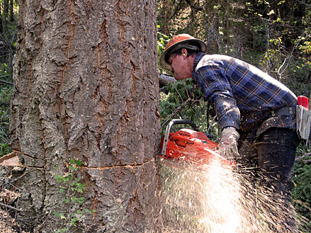 Picture of a logger - not from Clayoquot Sound
